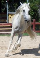 Andalusian 14 by roar-shack-stock