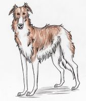 Elvis the Borzoi by nanaphiroth