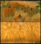 Pumpkin Patch Backgrounds by BackgroundSource