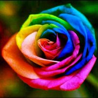 Rainbow Rose by DjhannaS