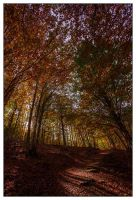 Autumn forest path by BaciuC