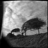 2trees by filmwaster