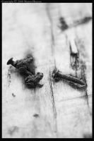 Two Toads Two Nails - bw by wroth