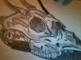 Deer-Skull-Sketch by rikkurikkujmr2k
