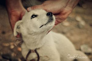 Loving Hands by OanaRayne