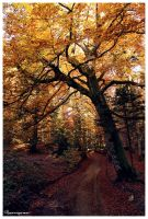 Walk under the warm leaves by FlorentCourty