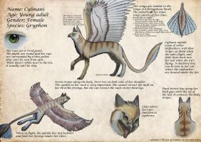 Reference sheet - Cylmani by The-fox-of-wonders