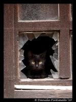 Kitty Window by TVD-Photography