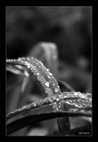 After the rain by j-sampson by bw-photography