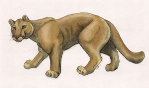 Puma concolor - Color by oakleafwolf