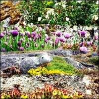 The Chives And Wild Flowers Together With A Sheep by eskile