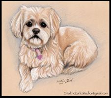 Dog in colored pencils by PetPawsArtist