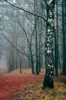 Mist in the Forest IX by NorthernLand