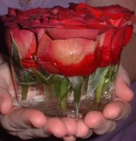 Rose in Ice_2 by yellowfeather1976