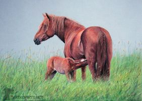 Mare and foal by Eija-H