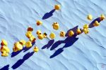 Rubber Duck Polar Migration by thejamcascru