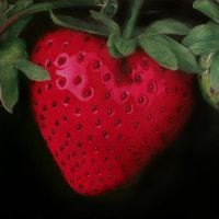 Strawberry by HorselessHerder