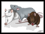 Cute rats by SweGizmo