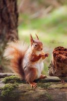 Invisible Nut by FreyaPhotos