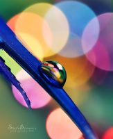 Colors Everywhere by SheilaBrinson