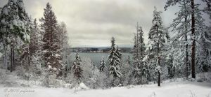 Snowy Forest in November by Pajunen