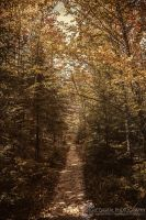 The Path by JessicaDobbs