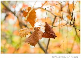 1_Autumn is... by Fimrah