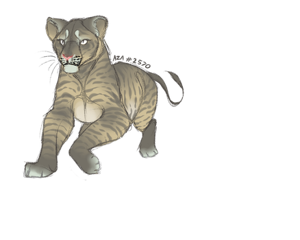 Lil lioness :O by Asalesha