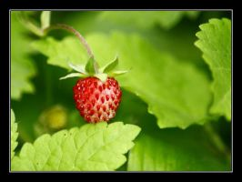wild-strawberry by elysawus