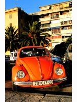 miami beetle by mountine
