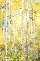 Aspens Alpine Loop by yellowtail1