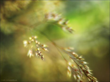 Bowing Grass by fakenrite