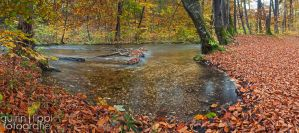 Carpet of leafs by quintz