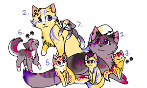 Cat family adoption by SoulCats