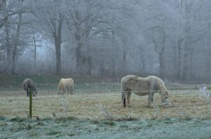 On a cold winterday by inbalance