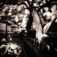 Birds on a fence...II by denis2