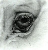 Horse Eye - Sketch by Cat-Equine-Portraits