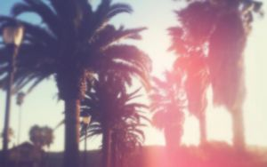 Soft California Palms by maxxdogg
