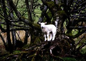 The Lamb by gwilym
