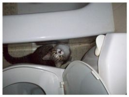 Toilet cat by BloodStainedSilk