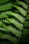 Fern Appreciation 3 by ratofthelab