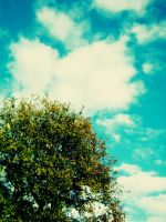 Blue sky , green tree by EmiiLly