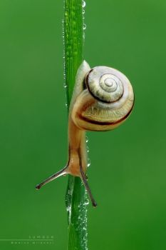 Snail by Mantide