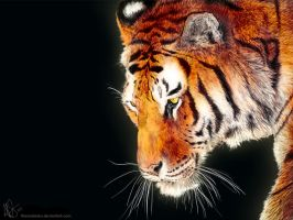 Panthera Tigris 2 Wallpaper by therealarien