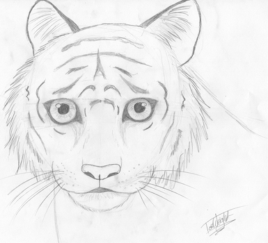 Tiger Sketch by TheSnickers545