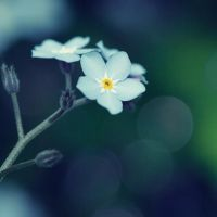 tiny, pretty flower by AnnieGreene