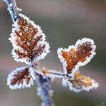 Frozen Leaves 02 by jo1976