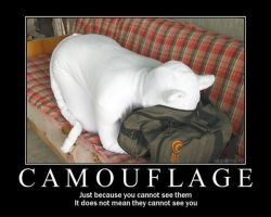 Camouflage cat by astis