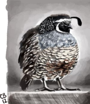 Quail Photo Study by sketchdoll