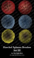 Haeckel Spheres Brushes 03 by the-night-bird